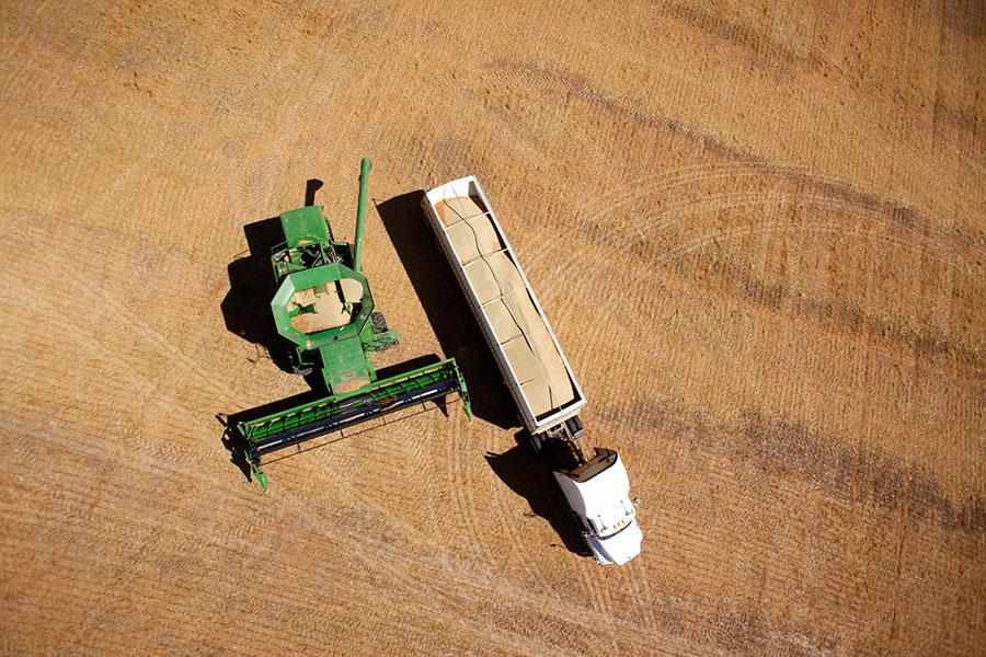 cosechadora en campo vaciando lentejas en semi-camión